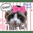 Lovely Ragdoll Cat