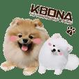 KBONA the Pomeranian's Diary I