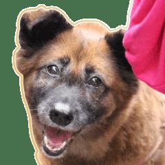 長壽狗狗的日常對話