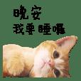 小橘貓 客製化_拿鐵 創作DoubleCats MAGGIE