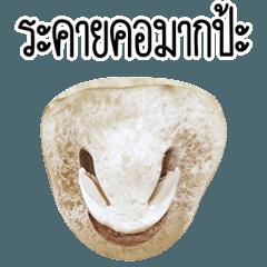 Mushroom face