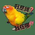 Kiwi_20190512091609