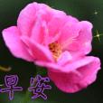 beautiful flower-4
