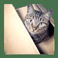のんびり猫「ごましお」スタンプ