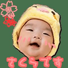 sakura的貼圖