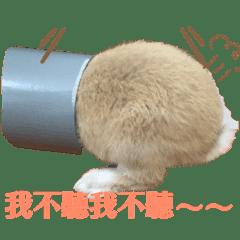 奶茶&龍貓