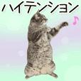 Hyper Cat!2