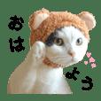 ハート柄ねこいくらちゃん/IG→ikura_0711