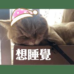 Cat_20190517