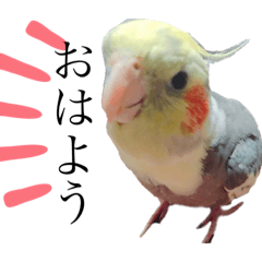 Live-action Animal Stickers