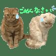 垂れ耳なネコたち