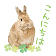Sticker for Cute rabbit greeting