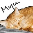My sweet cat MYU