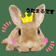 うさぎのうたまるちゃん★実写スタンプ