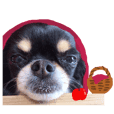 The sticker which Chihuahua dog has cute