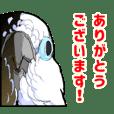 Mischievous White parrot 3