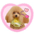 Poodle of love