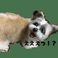 ミックス犬チャチャ君3