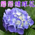 美麗花兒 5
