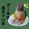 cocoro_20190525
