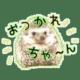 Headgehog noakamiii_4