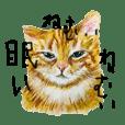 山下ミロの猫ばっか!