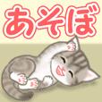 American Shorthair kitten 3
