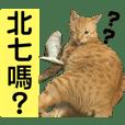 buttercat_20190602014918