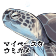 Sea turtle sticker.