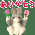 (Move)Fluffy rabbit