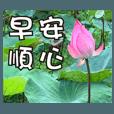 花朵-問候長輩圖