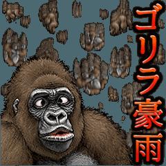 Gorilla gorilla 8