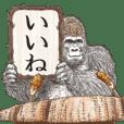 Gorilla gorilla gorilla of REIWA 02