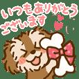 Miniature Schnauzer SYU-chan3