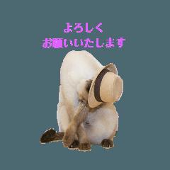 makoto_20190610202611