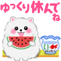 cute white Pomeranian summer animation