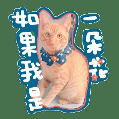 Small orange cat bean skin