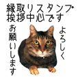 Picture Sticker of a brown tabby cat