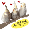 Seed man and CRAZY BIRDS 4