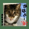 幸せ保護にゃんず vol.3 ~夏向き編~