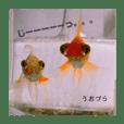 金魚と一緒に暮らす