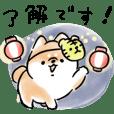 Shiba Inu Dog<summer 2019>