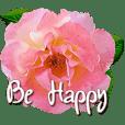 rose rose rose for greeting