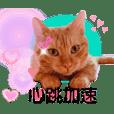 金瓜瓜心花花 Vol.2