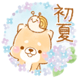 初夏❤️療癒柴犬❤️16