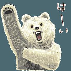 A bear that wants to become Betakkuma