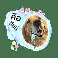 Bruuu the dog (24C)