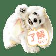 kazumimama_20190626190514