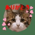 猫のりり ありがとうが多めスタンプ