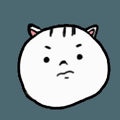 white cat 2019